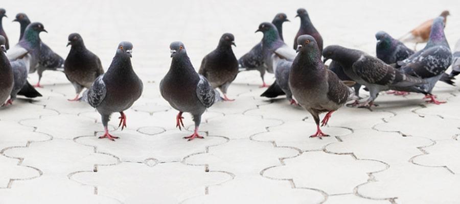 control de plaga de aves