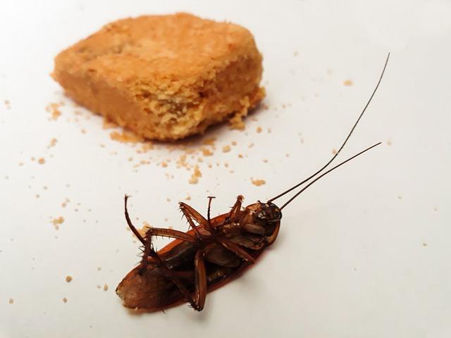 prevenir plagas cucarachas